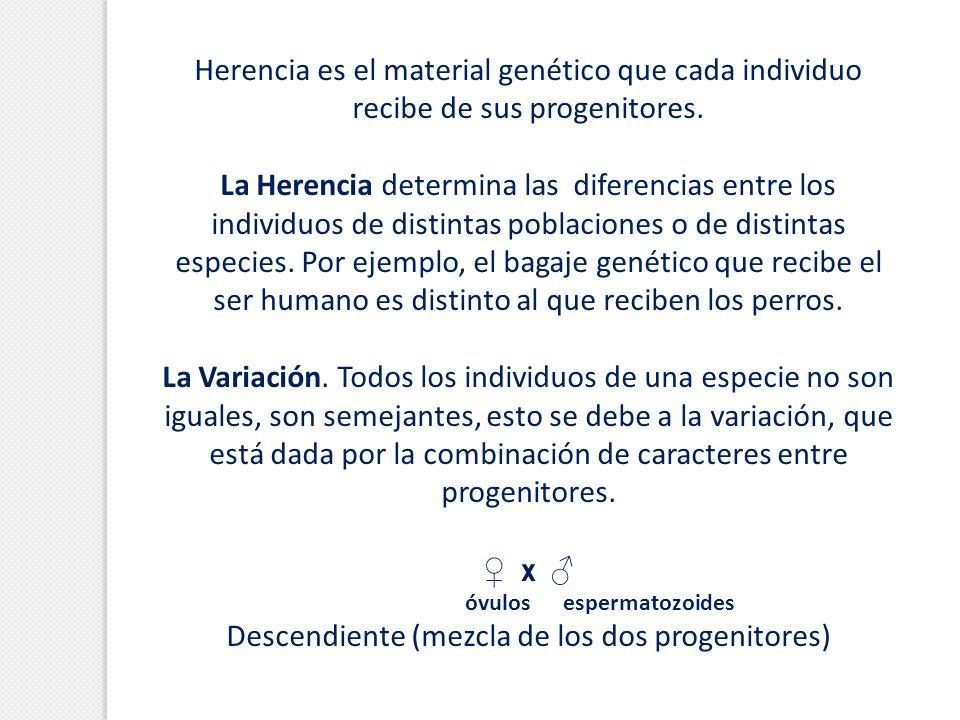 Herencia es el material genético que cada individuo recibe de sus progenitores. La Herencia determina las diferencias entre los individuos de distinta