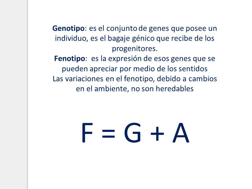 Genotipo: es el conjunto de genes que posee un individuo, es el bagaje génico que recibe de los progenitores. Fenotipo: es la expresión de esos genes