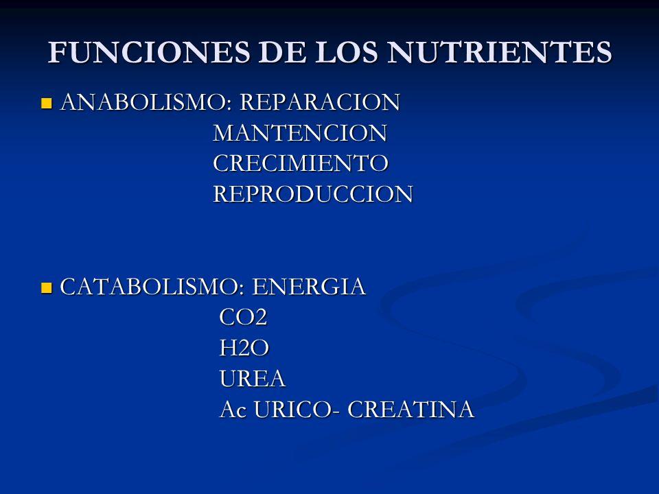 FUNCIONES DE LOS NUTRIENTES ANABOLISMO: REPARACION ANABOLISMO: REPARACION MANTENCION MANTENCION CRECIMIENTO CRECIMIENTO REPRODUCCION REPRODUCCION CATA
