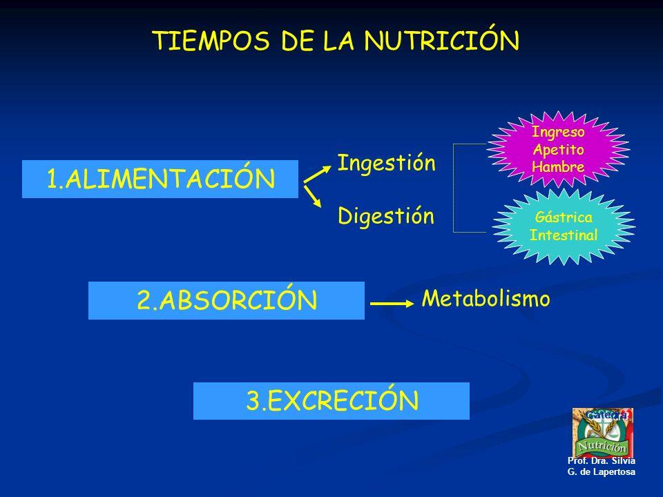 TIEMPOS DE LA NUTRICIÓN 1.ALIMENTACIÓN Ingestión Digestión Ingreso Apetito Hambre Gástrica Intestinal 2.ABSORCIÓN Metabolismo 3.EXCRECIÓN Catedra Prof