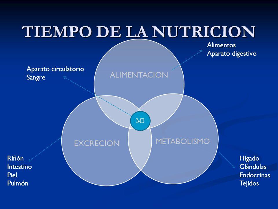TIEMPO DE LA NUTRICION MI Alimentos Aparato digestivo Hígado Glándulas Endocrinas Tejidos Riñón Intestino Piel Pulmón Aparato circulatorio Sangre