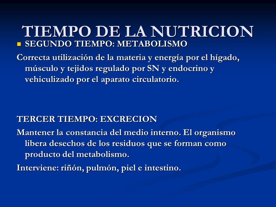 TIEMPO DE LA NUTRICION SEGUNDO TIEMPO: METABOLISMO SEGUNDO TIEMPO: METABOLISMO Correcta utilización de la materia y energía por el hígado, músculo y t