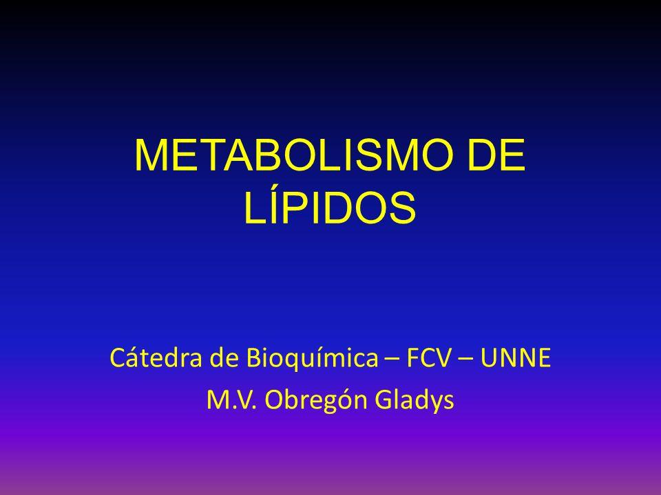 METABOLISMO DE LÍPIDOS Cátedra de Bioquímica – FCV – UNNE M.V. Obregón Gladys