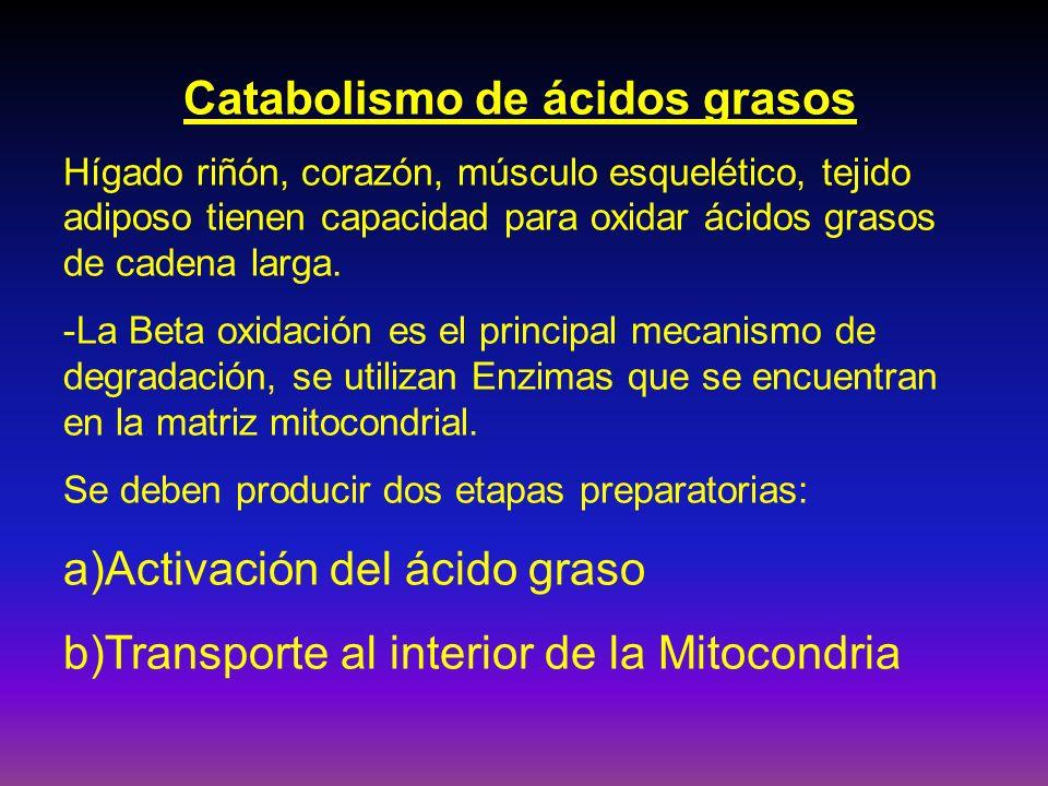 Catabolismo de ácidos grasos Hígado riñón, corazón, músculo esquelético, tejido adiposo tienen capacidad para oxidar ácidos grasos de cadena larga. -L