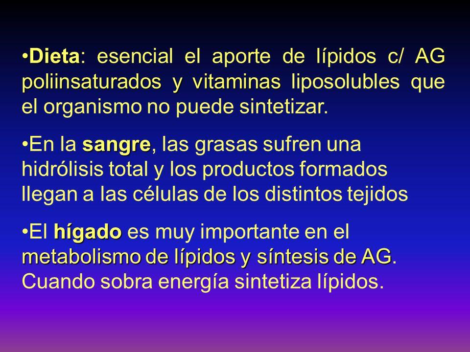 DietaAG poliinsaturados y vitaminasDieta: esencial el aporte de lípidos c/ AG poliinsaturados y vitaminas liposolubles que el organismo no puede sinte