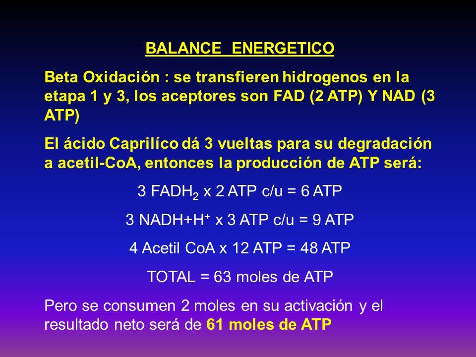 BALANCE ENERGETICO Beta Oxidación : se transfieren hidrogenos en la etapa 1 y 3, los aceptores son FAD (2 ATP) Y NAD (3 ATP) El ácido Caprilíco dá 3 v
