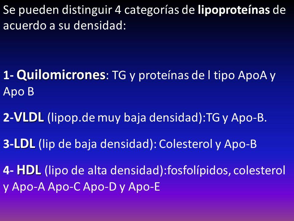 lipoproteínas Se pueden distinguir 4 categorías de lipoproteínas de acuerdo a su densidad: Quilomicrones 1- Quilomicrones : TG y proteínas de l tipo A