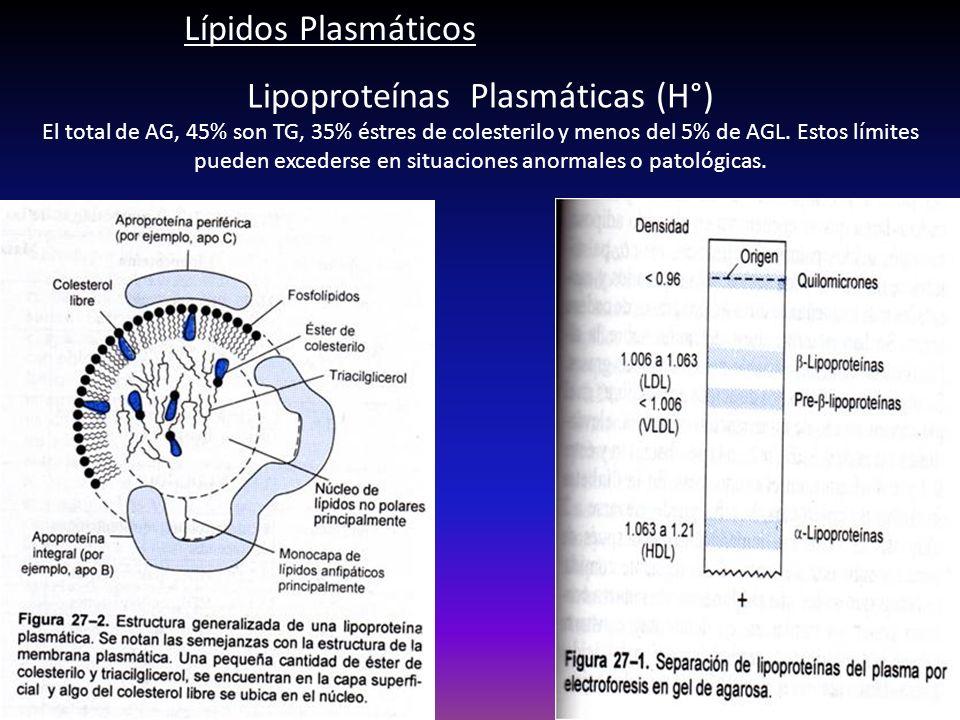 Lipoproteínas Plasmáticas (H°) El total de AG, 45% son TG, 35% éstres de colesterilo y menos del 5% de AGL. Estos límites pueden excederse en situacio