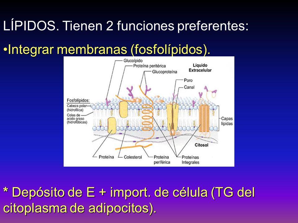Lipoproteínas Plasmáticas (H°) El total de AG, 45% son TG, 35% éstres de colesterilo y menos del 5% de AGL.