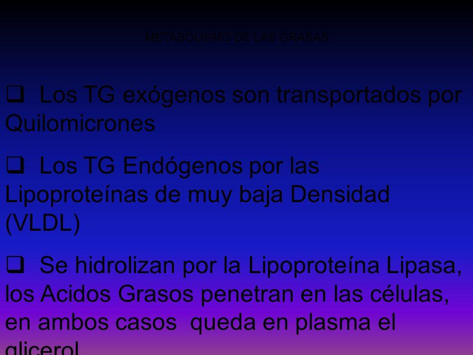 METABOLISMO DE LAS GRASAS Los TG exógenos son transportados por Quilomicrones Los TG Endógenos por las Lipoproteínas de muy baja Densidad (VLDL) Se hi