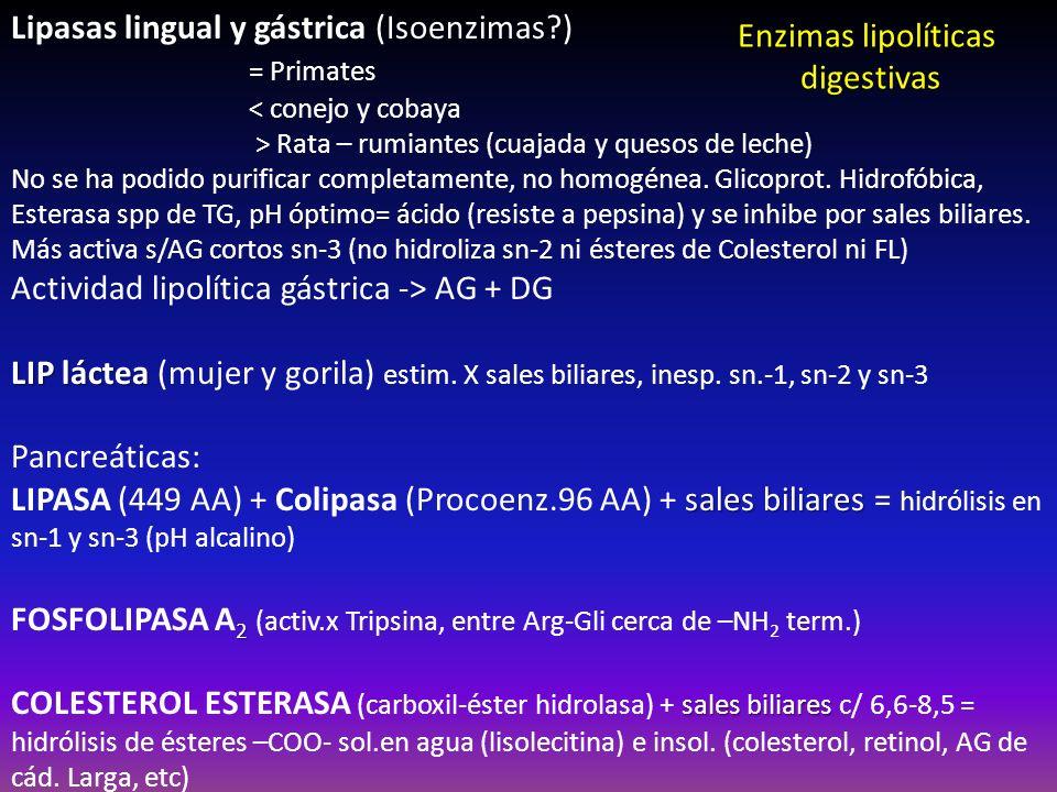 Lipasas lingual y gástrica (Isoenzimas?) = Primates < conejo y cobaya > Rata – rumiantes (cuajada y quesos de leche) pH óptimo= ácido No se ha podido