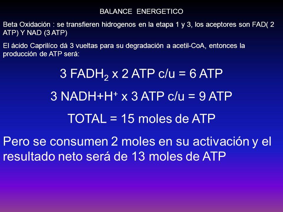 BALANCE ENERGETICO Beta Oxidación : se transfieren hidrogenos en la etapa 1 y 3, los aceptores son FAD( 2 ATP) Y NAD (3 ATP) El ácido Caprilíco dá 3 v