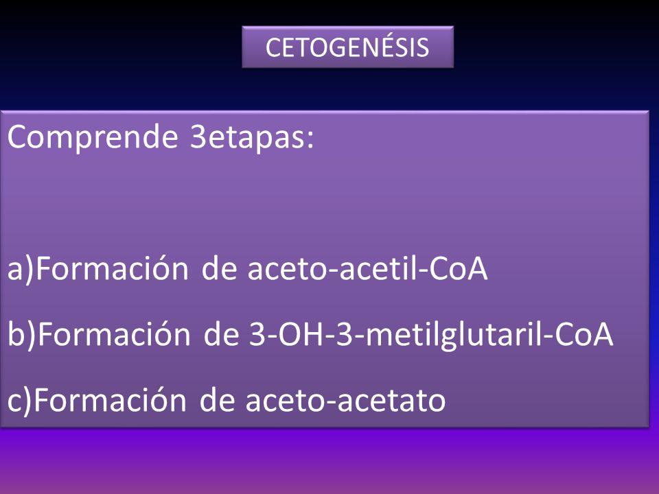 Comprende 3etapas: a)Formación de aceto-acetil-CoA b)Formación de 3-OH-3-metilglutaril-CoA c)Formación de aceto-acetato Comprende 3etapas: a)Formación