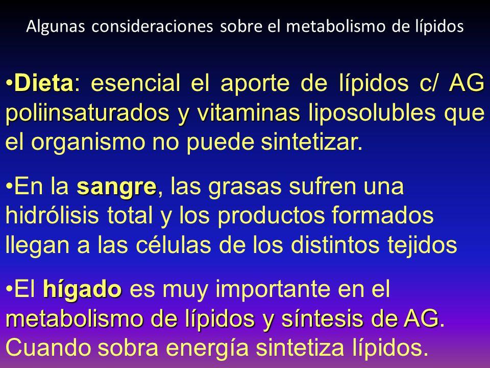 Algunas consideraciones sobre el metabolismo de lípidos DietaAG poliinsaturados y vitaminasDieta: esencial el aporte de lípidos c/ AG poliinsaturados
