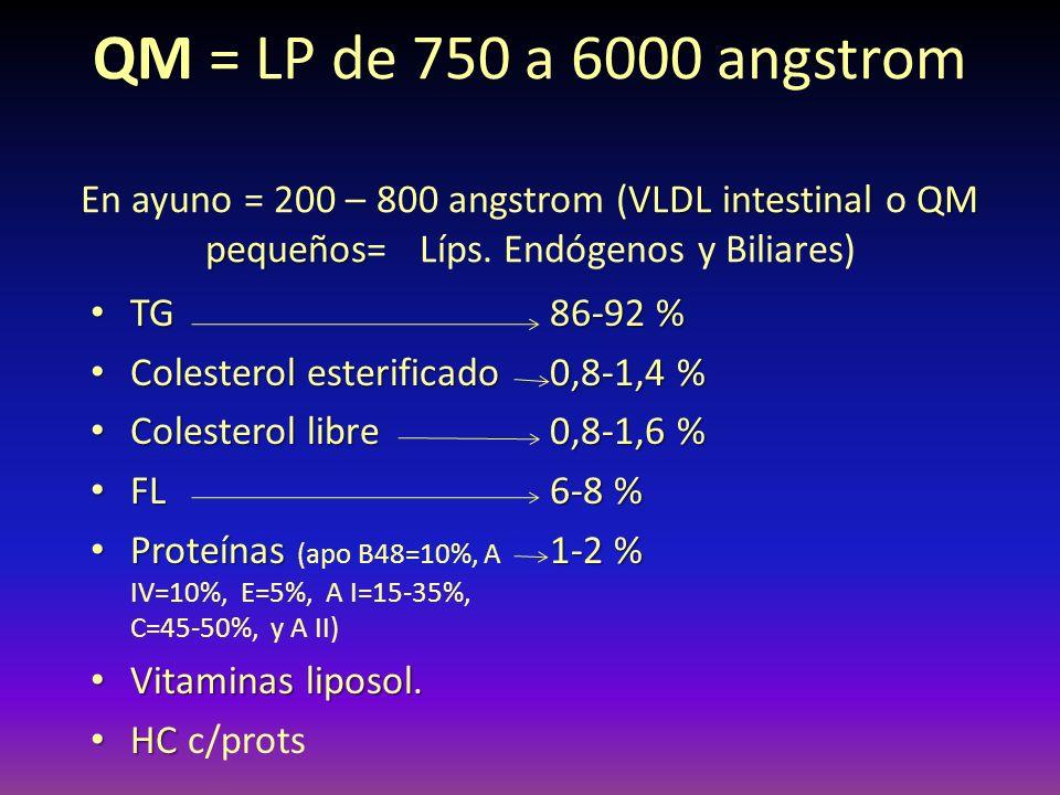 QM VLDL intestinal QM pequeños QM = LP de 750 a 6000 angstrom En ayuno = 200 – 800 angstrom (VLDL intestinal o QM pequeños= Líps. Endógenos y Biliares