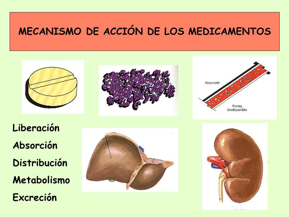 MECANISMO DE ACCIÓN DE LOS MEDICAMENTOS Liberación Absorción Distribución Metabolismo Excreción