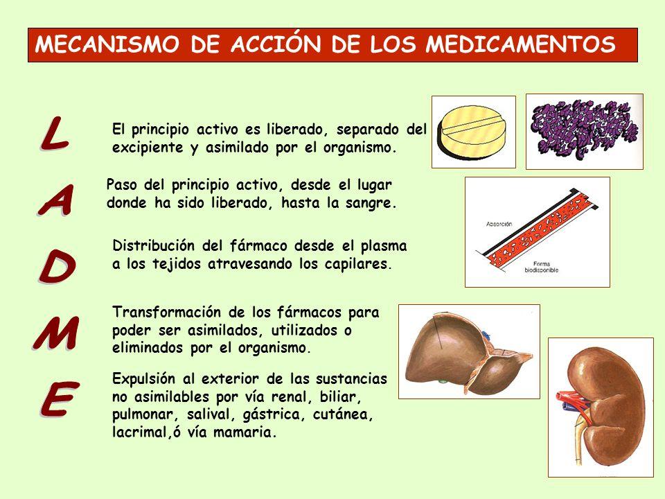 El principio activo es liberado, separado del excipiente y asimilado por el organismo. Distribución del fármaco desde el plasma a los tejidos atravesa