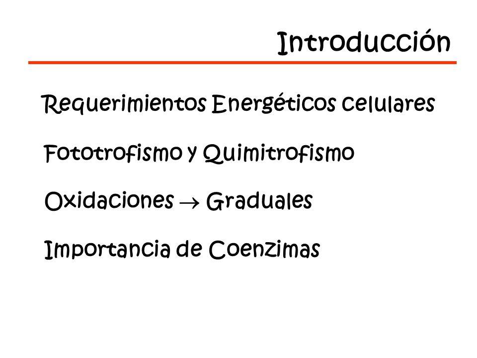 Introducción Requerimientos Energéticos celulares Fototrofismo y Quimitrofismo Oxidaciones Graduales Importancia de Coenzimas