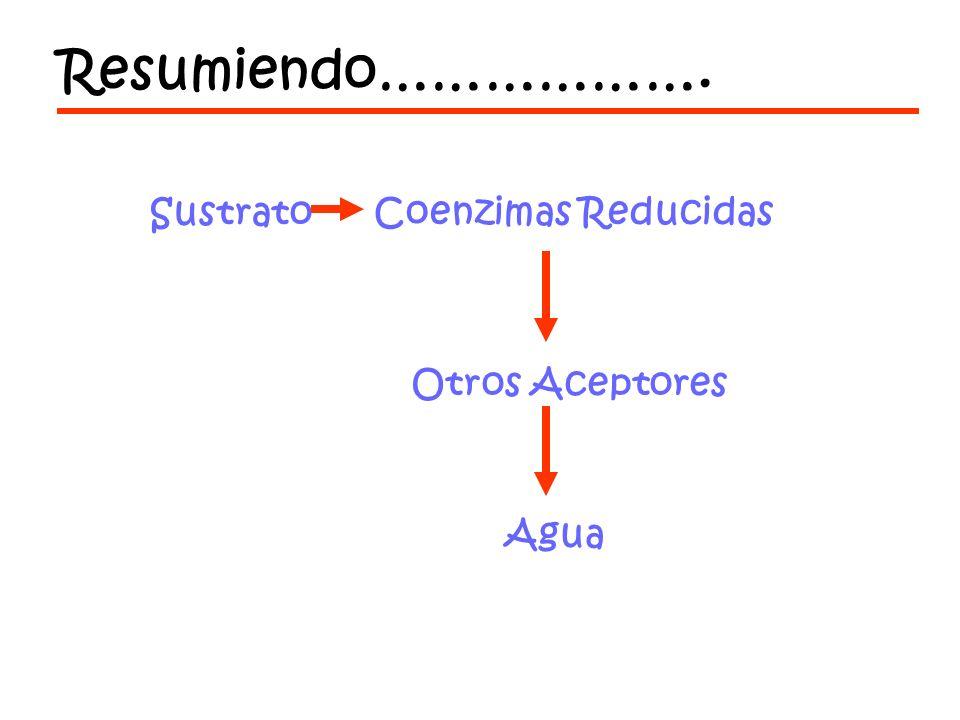 Resumiendo………………. Sustrato Coenzimas Reducidas Otros Aceptores Agua