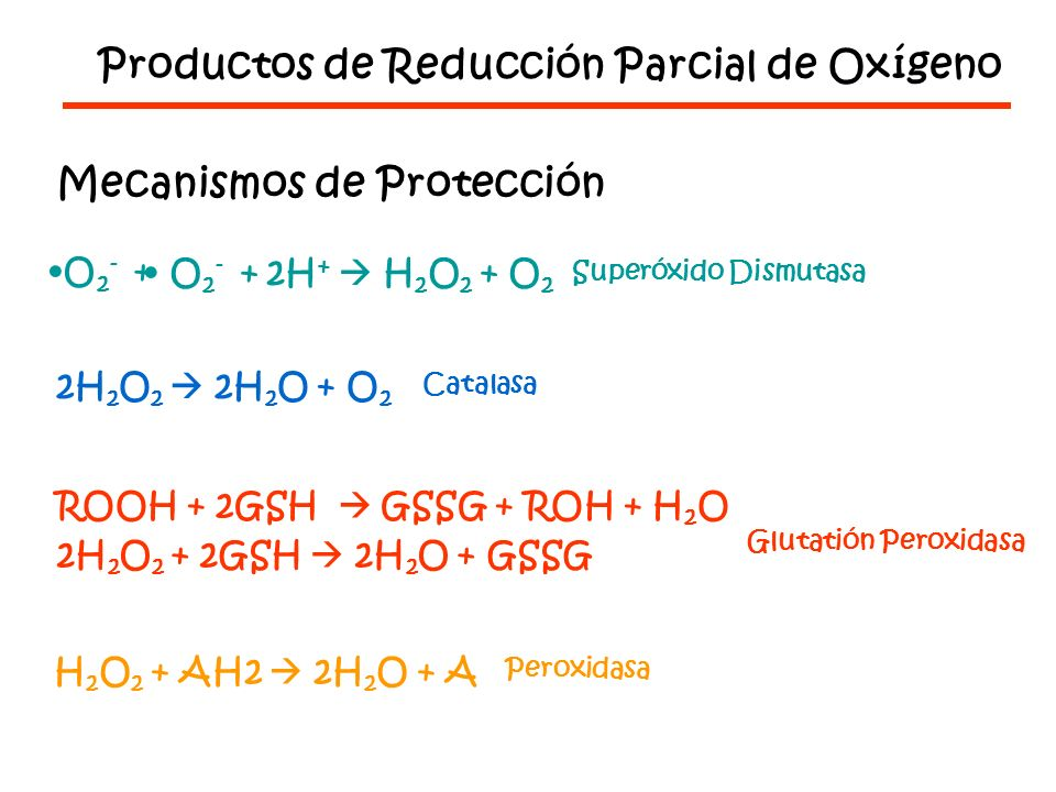 Productos de Reducción Parcial de Oxígeno Mecanismos de Protección O 2 - + O 2 - + 2H + H 2 O 2 + O 2 Superóxido Dismutasa 2H 2 O 2 2H 2 O + O 2 Catalasa ROOH + 2GSH GSSG + ROH + H 2 O 2H 2 O 2 + 2GSH 2H 2 O + GSSG Glutatión Peroxidasa H 2 O 2 + AH2 2H 2 O + A Peroxidasa