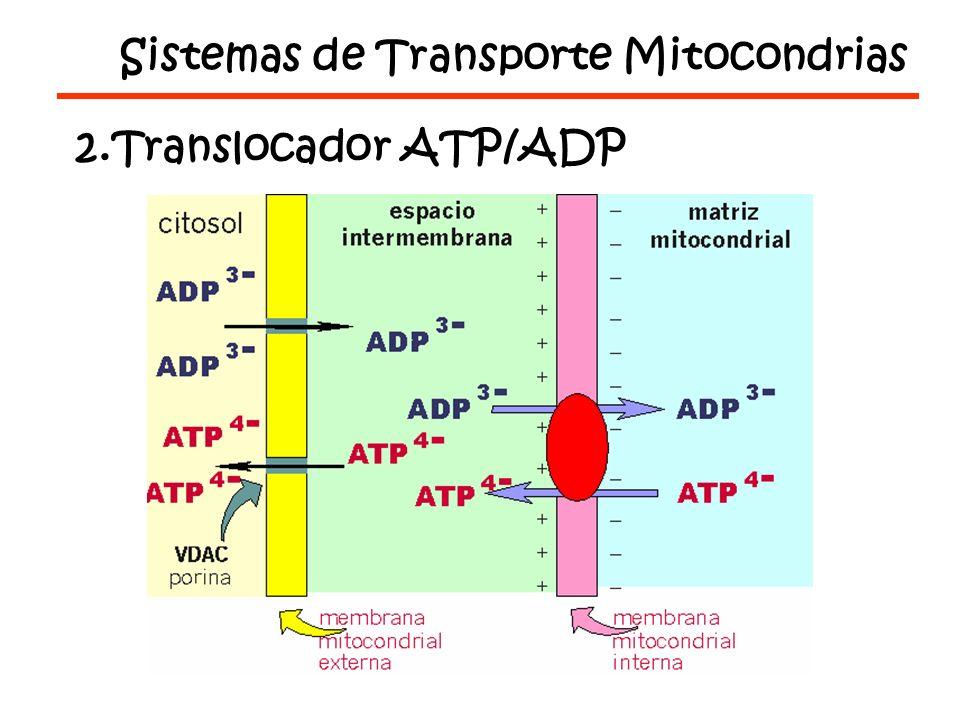 Sistemas de Transporte Mitocondrias 2.Translocador ATP/ADP