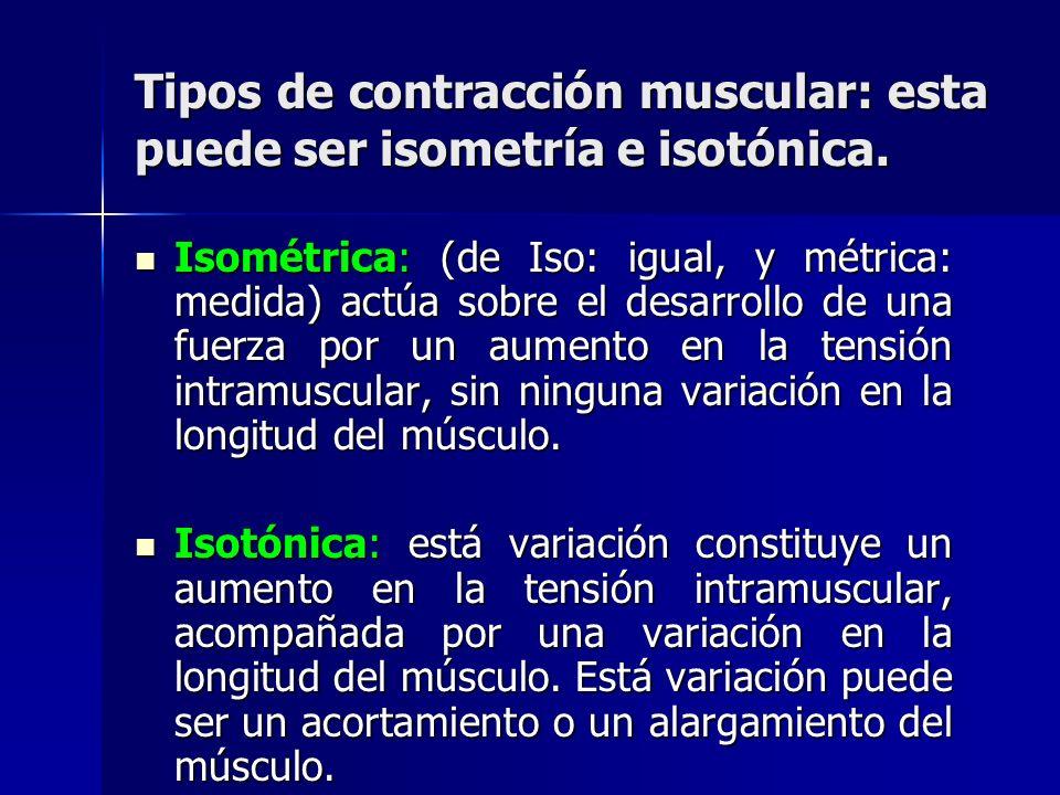 Tipos de contracción muscular: esta puede ser isometría e isotónica. Isométrica: (de Iso: igual, y métrica: medida) actúa sobre el desarrollo de una f