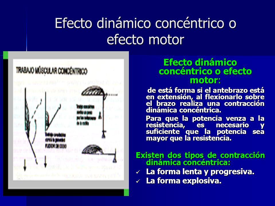 Efecto dinámico concéntrico o efecto motor Efecto dinámico concéntrico o efecto motor: de está forma si el antebrazo está en extensión, al flexionarlo