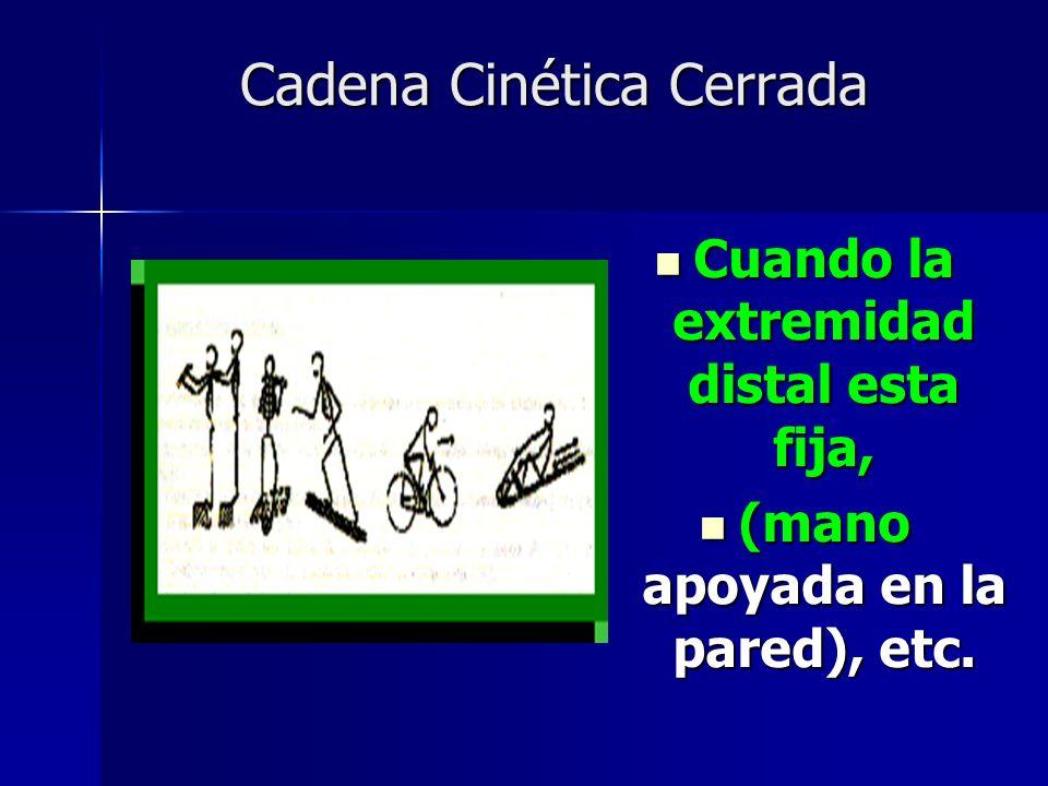 Cadena Cinética Cerrada Cuando la extremidad distal esta fija, Cuando la extremidad distal esta fija, (mano apoyada en la pared), etc. (mano apoyada e