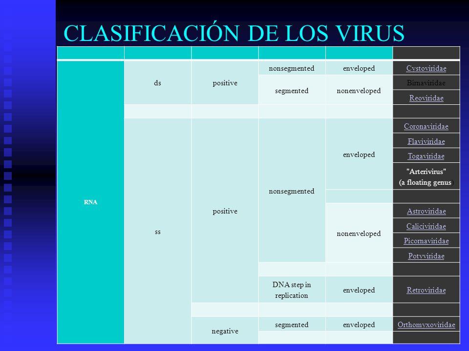 CLASIFICACIÓN DE LOS VIRUS RNA dspositive nonsegmentedenvelopedCystoviridae segmentednonenveloped Birnaviridae Reoviridae ss positive nonsegmented env