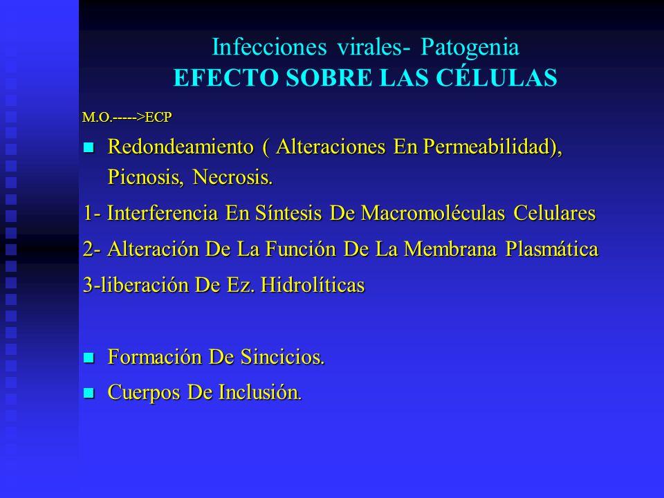 Infecciones virales- Patogenia EFECTO SOBRE LAS CÉLULAS M.O.----->ECP Redondeamiento ( Alteraciones En Permeabilidad), Picnosis, Necrosis. Redondeamie
