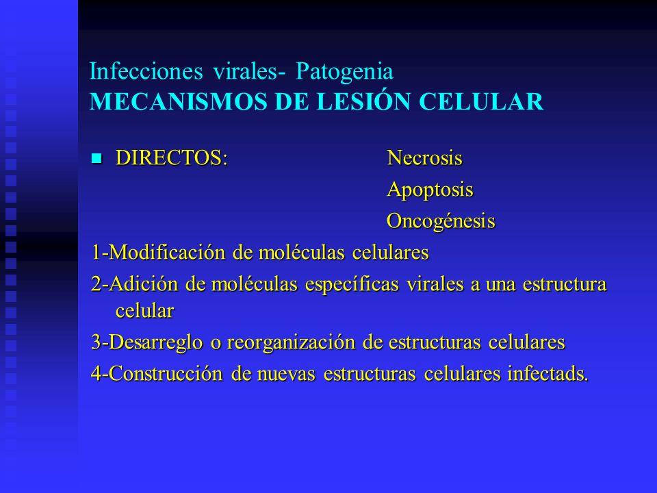 Infecciones virales- Patogenia MECANISMOS DE LESIÓN CELULAR DIRECTOS: Necrosis DIRECTOS: Necrosis Apoptosis Apoptosis Oncogénesis Oncogénesis 1-Modifi