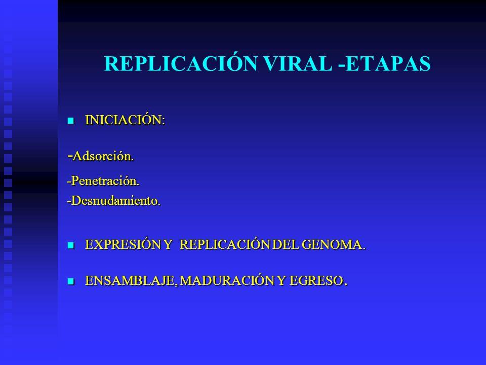 REPLICACIÓN VIRAL -ETAPAS
