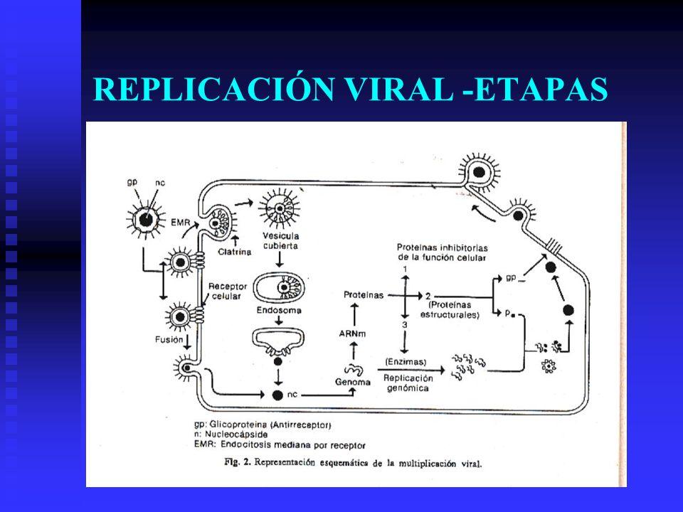 HIV: REPLICACIÓN