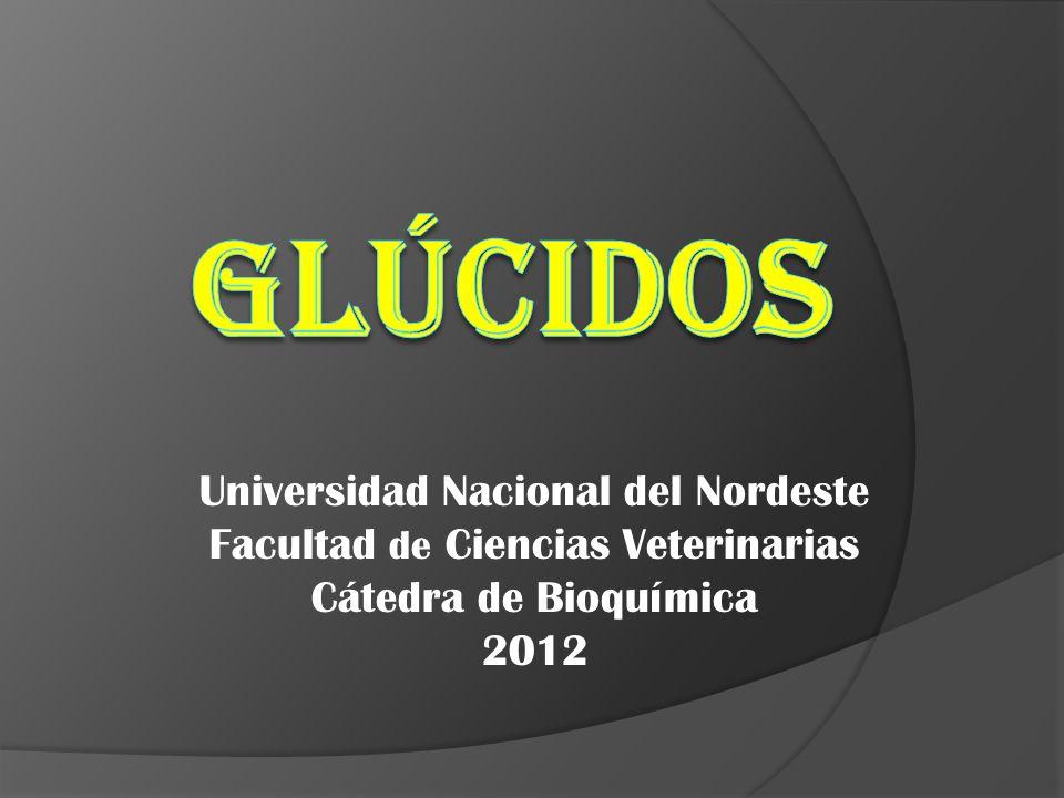 Universidad Nacional del Nordeste Facultad de Ciencias Veterinarias Cátedra de Bioquímica 2012