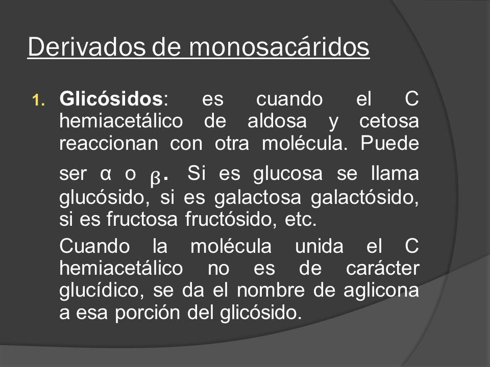 Derivados de monosacáridos 1. Glicósidos: es cuando el C hemiacetálico de aldosa y cetosa reaccionan con otra molécula. Puede ser α o. Si es glucosa s
