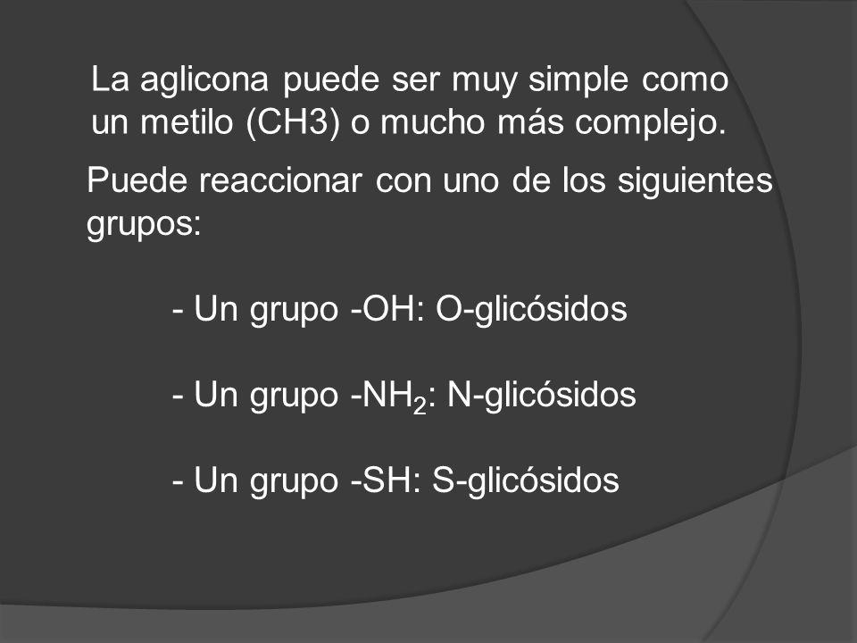 La aglicona puede ser muy simple como un metilo (CH3) o mucho más complejo. Puede reaccionar con uno de los siguientes grupos: - Un grupo -OH: O-glicó