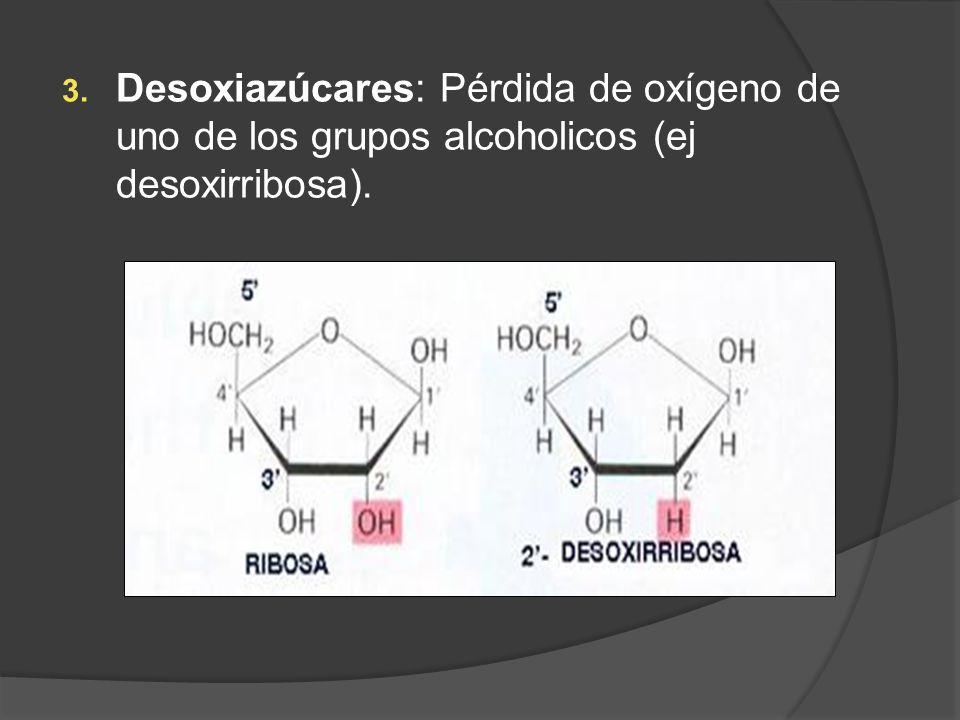 3. Desoxiazúcares: Pérdida de oxígeno de uno de los grupos alcoholicos (ej desoxirribosa).