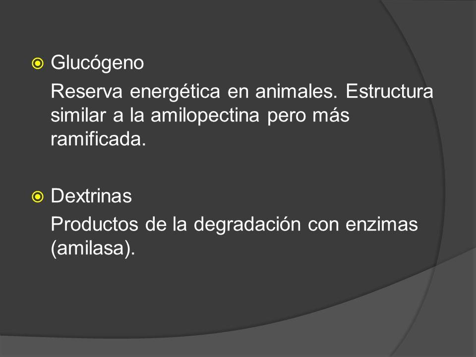 Glucógeno Reserva energética en animales. Estructura similar a la amilopectina pero más ramificada. Dextrinas Productos de la degradación con enzimas
