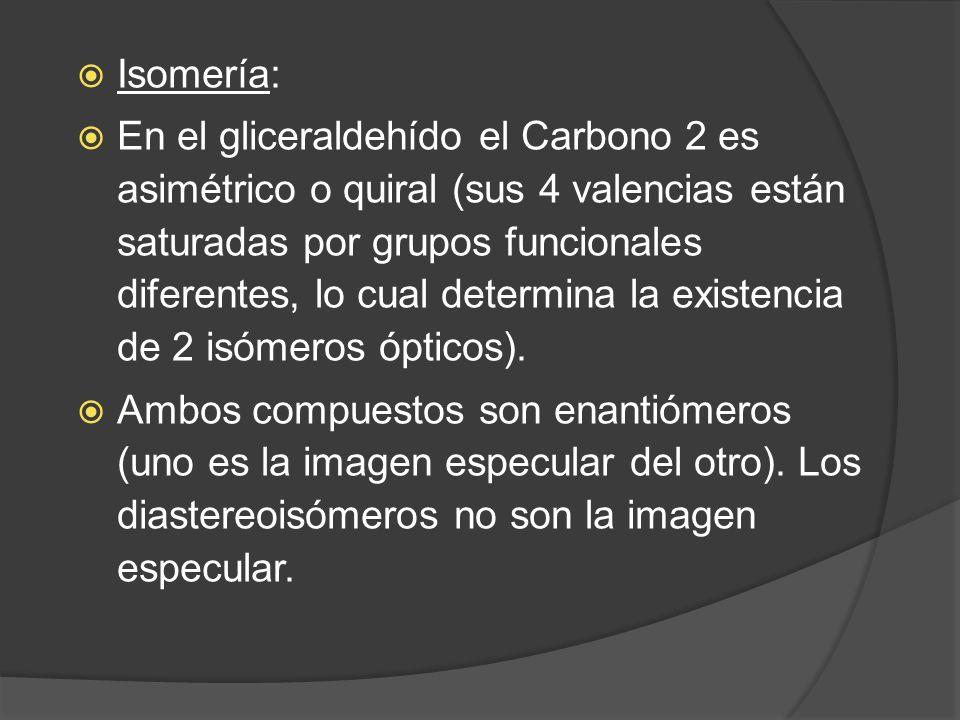 Isomería: En el gliceraldehído el Carbono 2 es asimétrico o quiral (sus 4 valencias están saturadas por grupos funcionales diferentes, lo cual determi