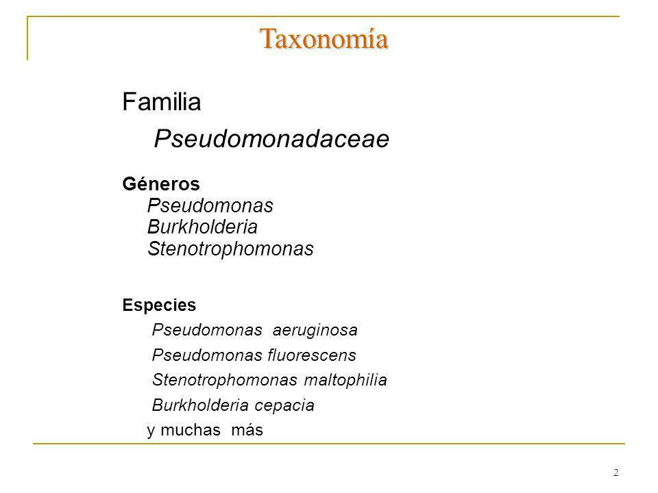 2 Familia Pseudomonadaceae Géneros Pseudomonas Burkholderia Stenotrophomonas Especies Pseudomonas aeruginosa Pseudomonas fluorescens Stenotrophomonas