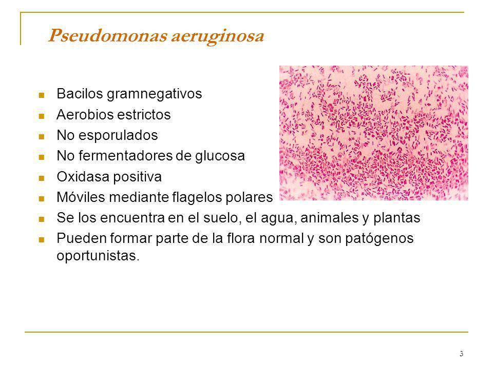 3 Pseudomonas aeruginosa Bacilos gramnegativos Aerobios estrictos No esporulados No fermentadores de glucosa Oxidasa positiva Móviles mediante flagelo