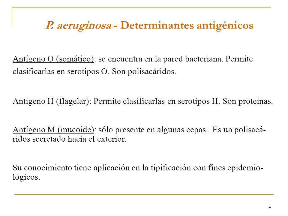 4 P. aeruginosa - Determinantes antigénicos Antígeno O (somático): se encuentra en la pared bacteriana. Permite clasificarlas en serotipos O. Son poli