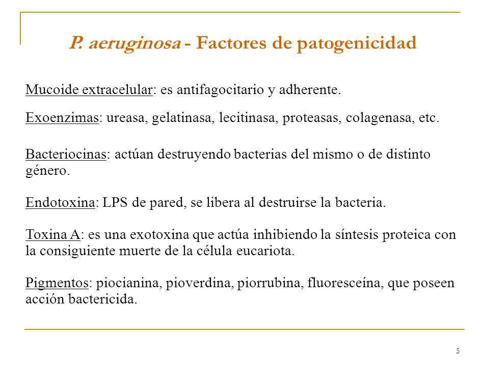 5 P. aeruginosa - Factores de patogenicidad Mucoide extracelular: es antifagocitario y adherente. Exoenzimas: ureasa, gelatinasa, lecitinasa, proteasa