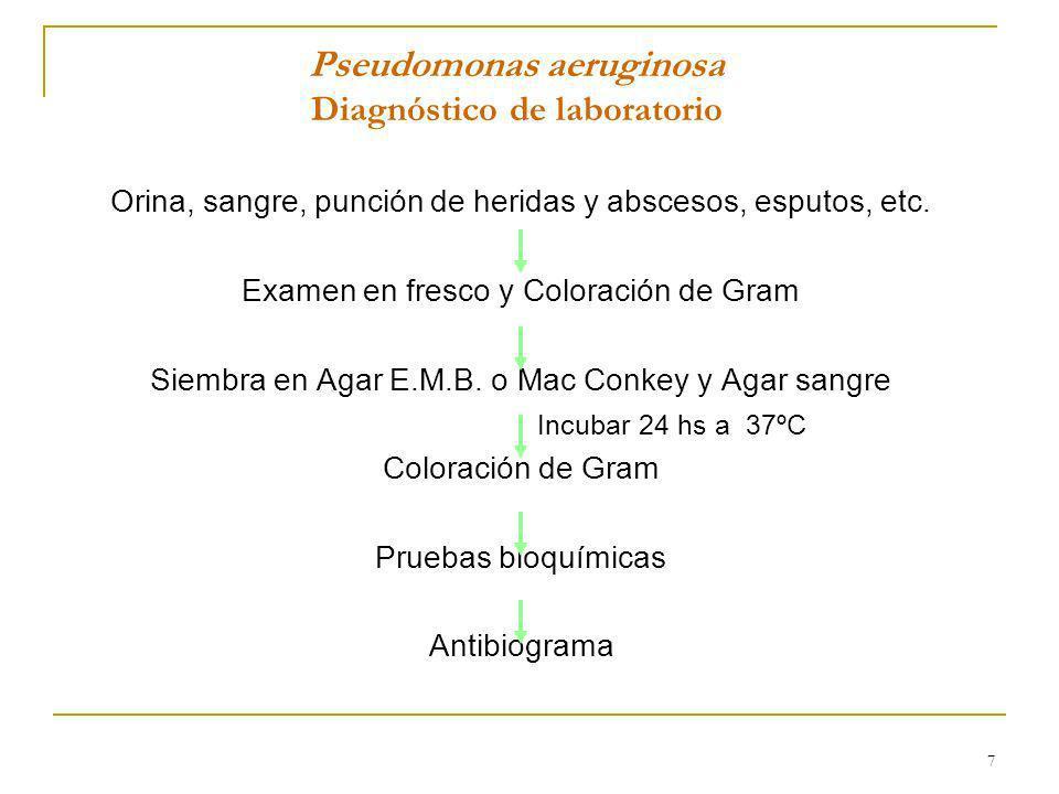 7 Pseudomonas aeruginosa Diagnóstico de laboratorio Orina, sangre, punción de heridas y abscesos, esputos, etc. Examen en fresco y Coloración de Gram