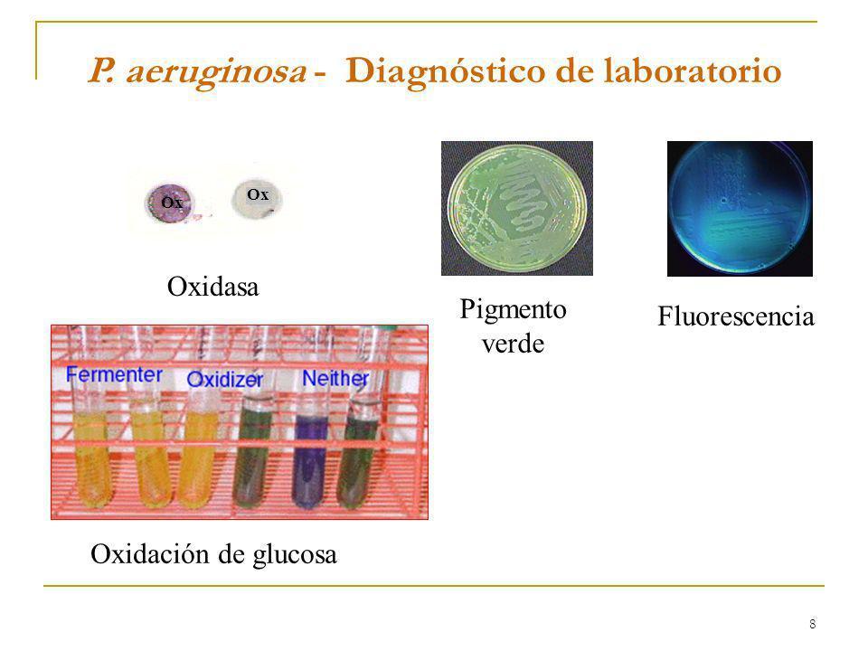 8 P. aeruginosa - Diagnóstico de laboratorio Ox Oxidasa Pigmento verde Fluorescencia Oxidación de glucosa