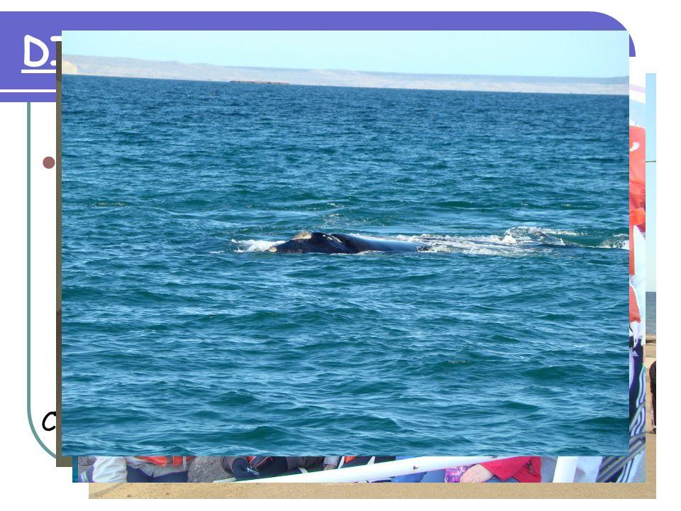 DIA 3: 22 de Setiembre Excursión de todo el día a la Península de Valdés, visitando el centro de interpretación.
