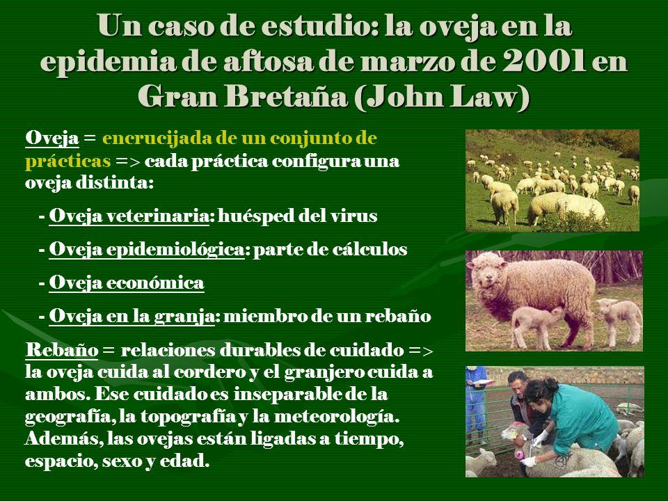 Un caso de estudio: la oveja en la epidemia de aftosa de marzo de 2001 en Gran Bretaña (John Law) Oveja = encrucijada de un conjunto de prácticas = ca