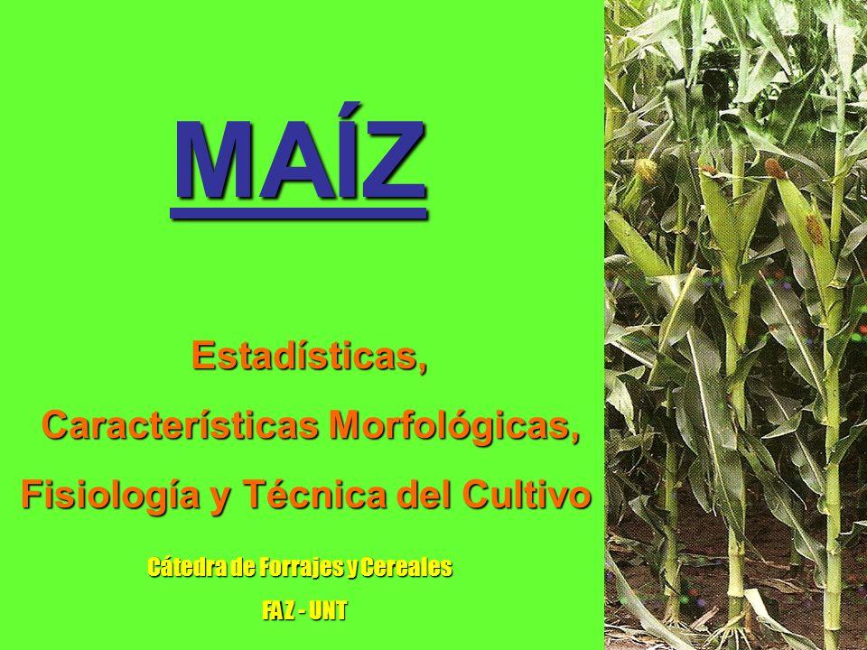 Requerimientos hídricos del cultivo Los requerimientos hídricos mínimos del maíz durante su ciclo son de 500 mm, con niveles óptimos de alrededor de 800 mm.