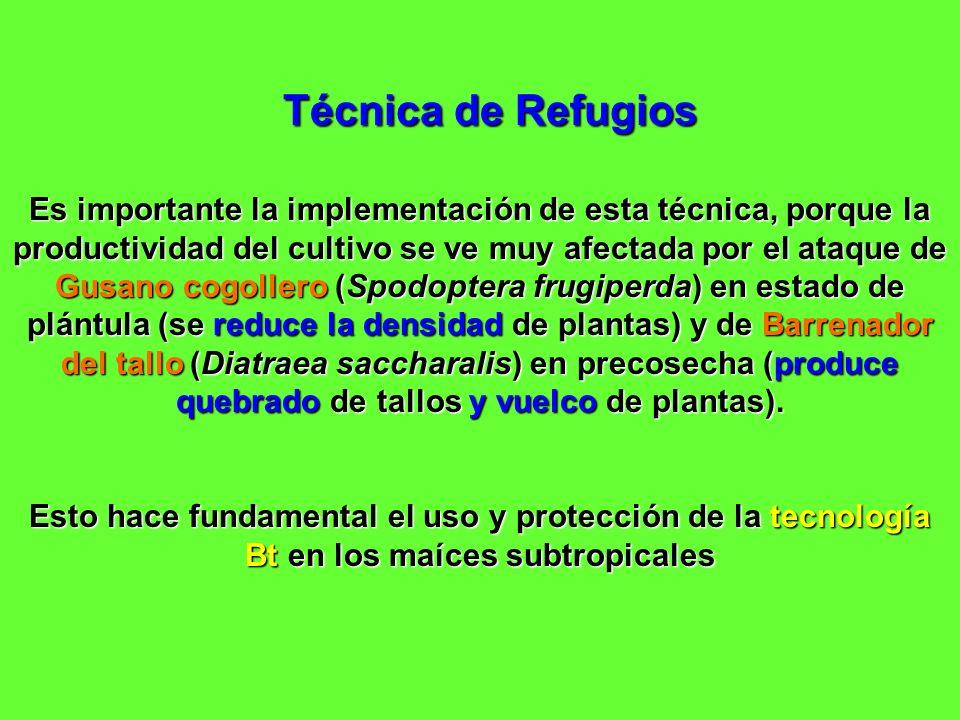 Técnica de Refugios Es importante la implementación de esta técnica, porque la productividad del cultivo se ve muy afectada por el ataque de Gusano co