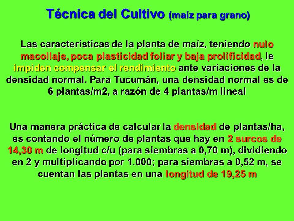 Técnica del Cultivo (maíz para grano) Las características de la planta de maíz, teniendo nulo macollaje, poca plasticidad foliar y baja prolificidad,